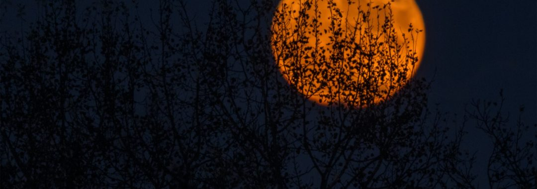 orange moon filtered through trees at night